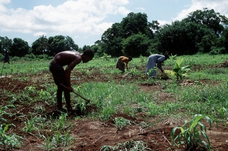 Farmers in Somalia